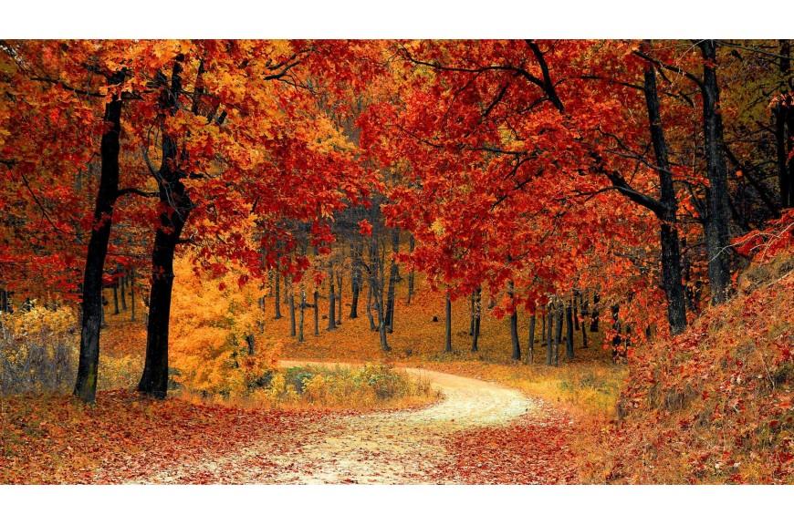 Najlepsze tkaniny na jesień i co z nich uszyć?